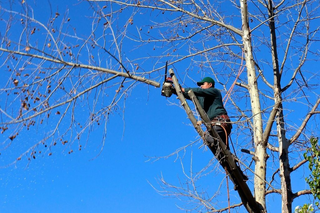 Contact Us-Sunrise FL Tree Trimming and Stump Grinding Services-We Offer Tree Trimming Services, Tree Removal, Tree Pruning, Tree Cutting, Residential and Commercial Tree Trimming Services, Storm Damage, Emergency Tree Removal, Land Clearing, Tree Companies, Tree Care Service, Stump Grinding, and we're the Best Tree Trimming Company Near You Guaranteed!