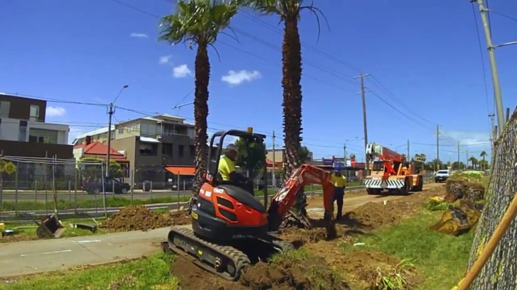 Palm Tree Removal-Sunrise FL Tree Trimming and Stump Grinding Services-We Offer Tree Trimming Services, Tree Removal, Tree Pruning, Tree Cutting, Residential and Commercial Tree Trimming Services, Storm Damage, Emergency Tree Removal, Land Clearing, Tree Companies, Tree Care Service, Stump Grinding, and we're the Best Tree Trimming Company Near You Guaranteed!