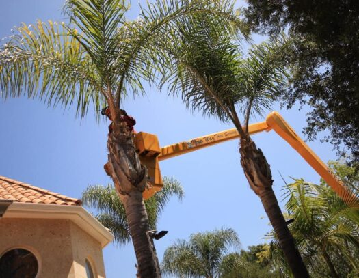 Palm Tree Trimming-Sunrise FL Tree Trimming and Stump Grinding Services-We Offer Tree Trimming Services, Tree Removal, Tree Pruning, Tree Cutting, Residential and Commercial Tree Trimming Services, Storm Damage, Emergency Tree Removal, Land Clearing, Tree Companies, Tree Care Service, Stump Grinding, and we're the Best Tree Trimming Company Near You Guaranteed!