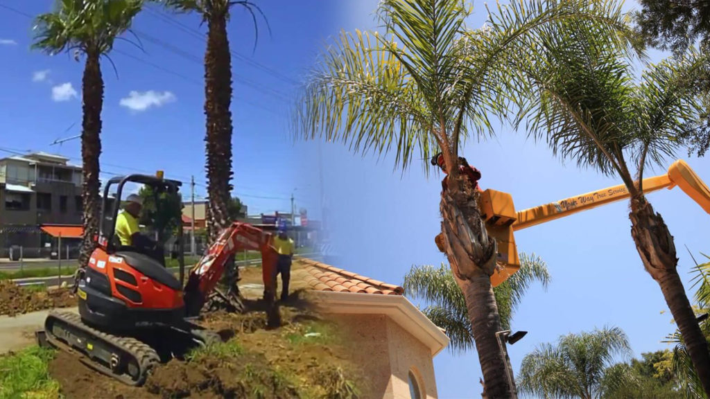 Palm tree trimming & palm tree removal-Sunrise FL Tree Trimming and Stump Grinding Services-We Offer Tree Trimming Services, Tree Removal, Tree Pruning, Tree Cutting, Residential and Commercial Tree Trimming Services, Storm Damage, Emergency Tree Removal, Land Clearing, Tree Companies, Tree Care Service, Stump Grinding, and we're the Best Tree Trimming Company Near You Guaranteed!