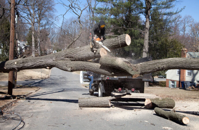 Residential Tree Services-Sunrise FL Tree Trimming and Stump Grinding Services-We Offer Tree Trimming Services, Tree Removal, Tree Pruning, Tree Cutting, Residential and Commercial Tree Trimming Services, Storm Damage, Emergency Tree Removal, Land Clearing, Tree Companies, Tree Care Service, Stump Grinding, and we're the Best Tree Trimming Company Near You Guaranteed!