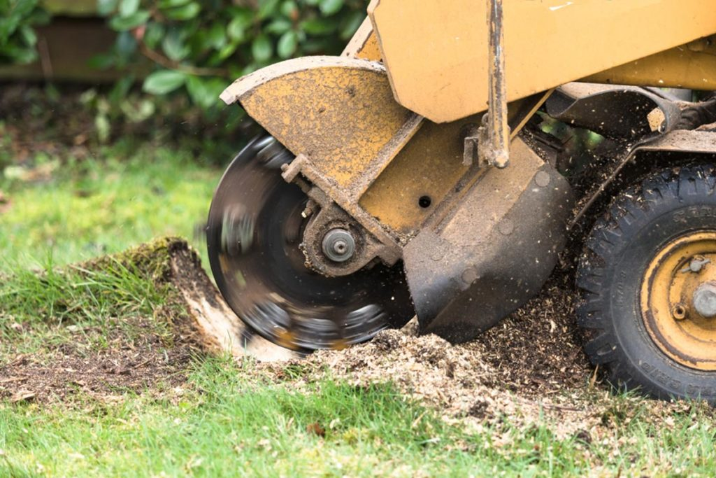 Stump Grinding-Sunrise FL Tree Trimming and Stump Grinding Services-We Offer Tree Trimming Services, Tree Removal, Tree Pruning, Tree Cutting, Residential and Commercial Tree Trimming Services, Storm Damage, Emergency Tree Removal, Land Clearing, Tree Companies, Tree Care Service, Stump Grinding, and we're the Best Tree Trimming Company Near You Guaranteed!