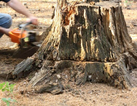 Stump Removal-Sunrise FL Tree Trimming and Stump Grinding Services-We Offer Tree Trimming Services, Tree Removal, Tree Pruning, Tree Cutting, Residential and Commercial Tree Trimming Services, Storm Damage, Emergency Tree Removal, Land Clearing, Tree Companies, Tree Care Service, Stump Grinding, and we're the Best Tree Trimming Company Near You Guaranteed!