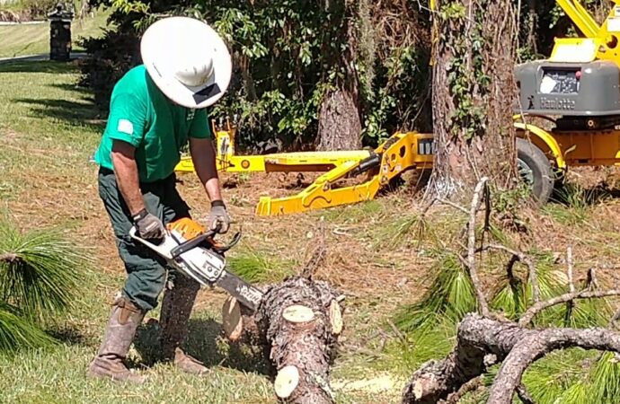 Sunrise FL Tree Trimming and Stump Grinding Services Home Page Image-We Offer Tree Trimming Services, Tree Removal, Tree Pruning, Tree Cutting, Residential and Commercial Tree Trimming Services, Storm Damage, Emergency Tree Removal, Land Clearing, Tree Companies, Tree Care Service, Stump Grinding, and we're the Best Tree Trimming Company Near You Guaranteed!