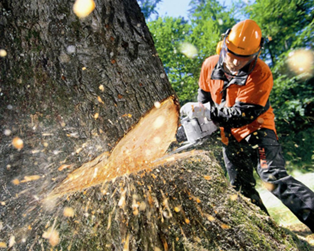 Tree Cutting-Sunrise FL Tree Trimming and Stump Grinding Services-We Offer Tree Trimming Services, Tree Removal, Tree Pruning, Tree Cutting, Residential and Commercial Tree Trimming Services, Storm Damage, Emergency Tree Removal, Land Clearing, Tree Companies, Tree Care Service, Stump Grinding, and we're the Best Tree Trimming Company Near You Guaranteed!