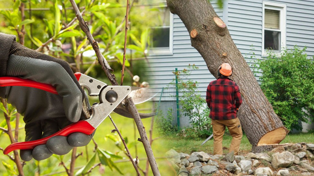 Tree pruning & tree removal-Sunrise FL Tree Trimming and Stump Grinding Services-We Offer Tree Trimming Services, Tree Removal, Tree Pruning, Tree Cutting, Residential and Commercial Tree Trimming Services, Storm Damage, Emergency Tree Removal, Land Clearing, Tree Companies, Tree Care Service, Stump Grinding, and we're the Best Tree Trimming Company Near You Guaranteed!
